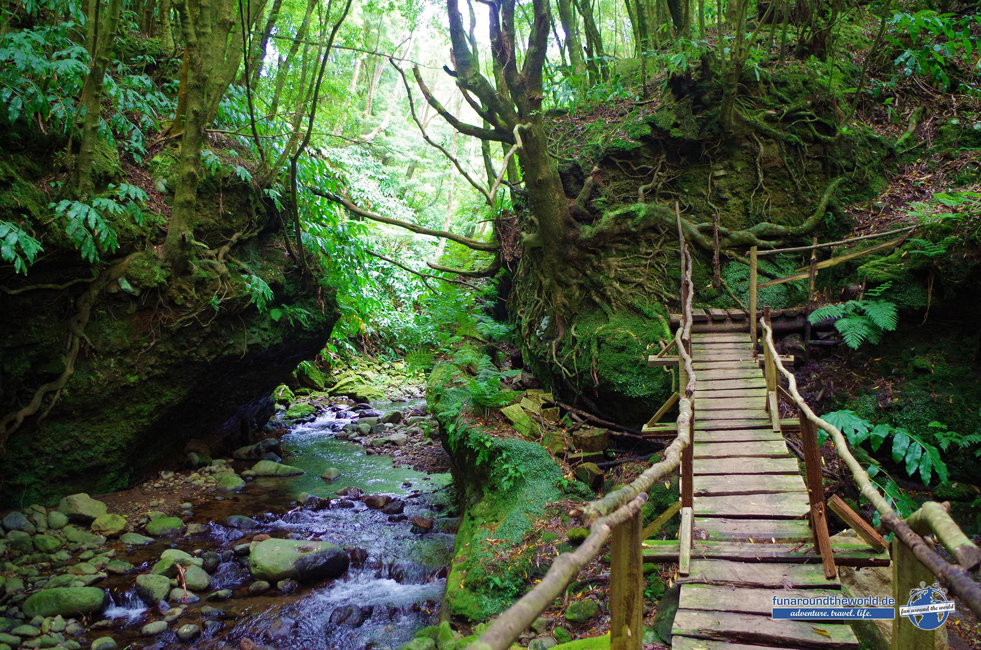 Wanderungen abseits der Touristenpfade durch die tiefgrünen Urwälder auf Sao Miguel bei Faial da Terra