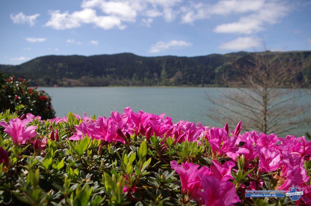 Blühende Fauna auf den Azoren