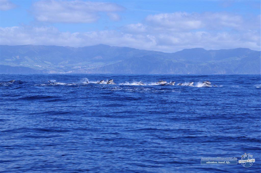 Dolphin Watching vor Sao Miguel